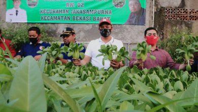 Photo of Lahan Bercocok Tanam Sudah Jarang, Wakil Walikota Bekasi Ajak Warga Budidaya Hidroponik
