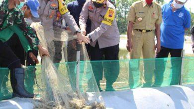 Photo of Dukung Program Ketahanan Pangan Nasional, Kapolres Pekalongan Hadiri Panen Udang Vaname Di Desa Semut