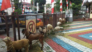 Photo of Meringankan Beban Masyarakat, Polsek Kebon Jeruk Salurkan Hewan Qurban Dimasa Pandemi Covid-19