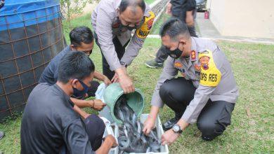 Photo of Kapolres Pekalongan Bagikan Hasil Panen Budidaya Ikan Lele Kepada Warga Setempat