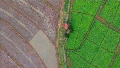 Photo of My Food Estate Diusahakan di Lahan Mineral
