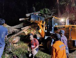 2 Orang Tewas Dalam Mobil Yang Tertimpa Pohon Tumbang di Bengkulu