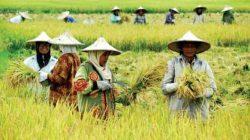 Rp 2,7 Triliun KUR Disiapkan Untuk Petani