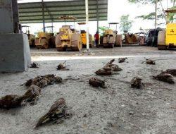 Pengamat Lingkungan Ungkap Penyebab Matinya Ribuan Burung Pipit Yang Viral